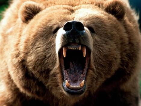 Tánc medve orgia videók